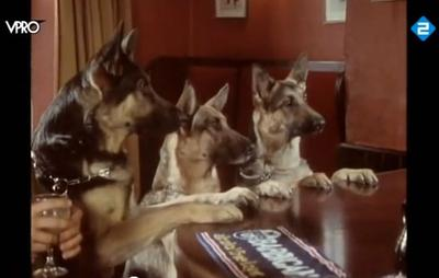3 German Shepherds at a British Pub...
