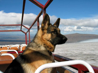 German Shepherd with beautiful scenery