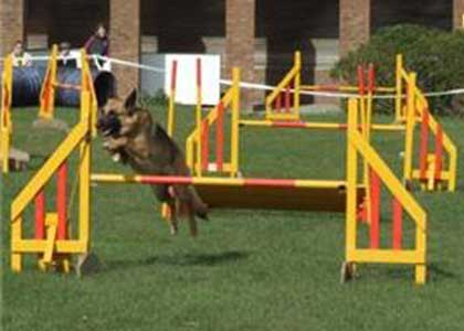 Agility Course For Dogs Dog Agility Training Clubs