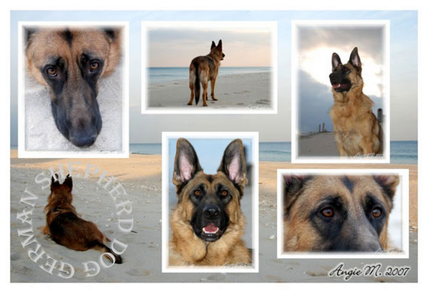GSD wallpaper - GSD on beach