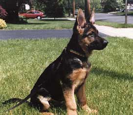 Kindergarten Obedience Is An Important Step In Dog Training