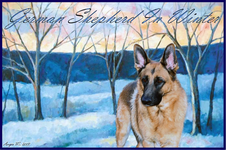 German Shepherd winter Wallpaper