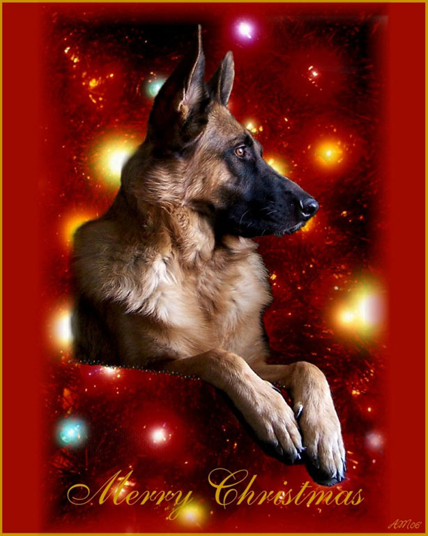 merry christmas and german shepherds gif
