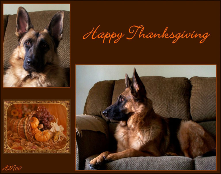 Thanksgiving GSD Wallpaper