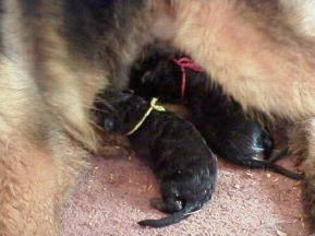 Allys first litter