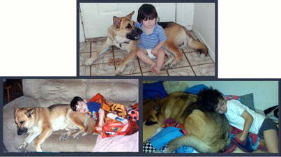 GSD of the Month - February 2012 - GSD Jager