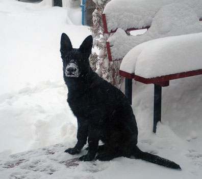 Smokey in the snow