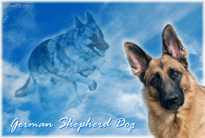 German Shepherd with clouds Wallpaper