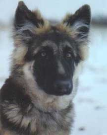 coated GSD