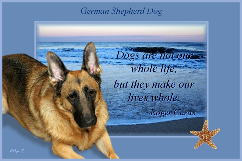 German Shepherd poem Wallpaper