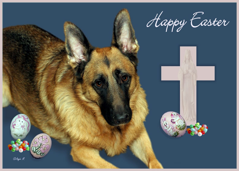 German Shepherd Easter Wallpaper