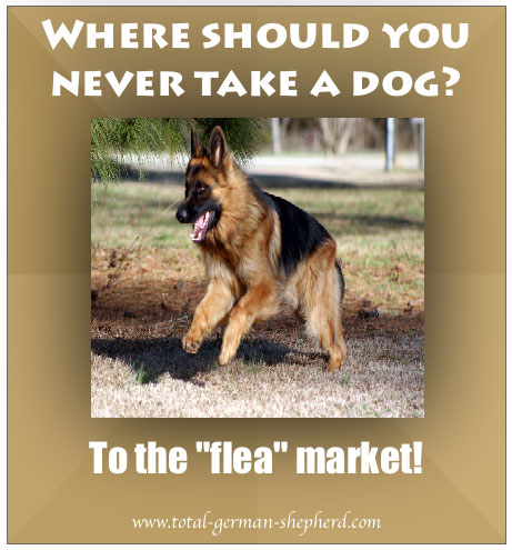 fleamarket German Shepherd caption