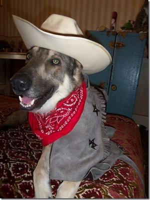 bronson in his cowboy costume for halloween
