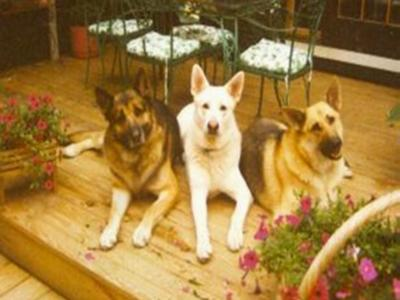 My Furkids, Baby Bear, Chip, and Segen.
