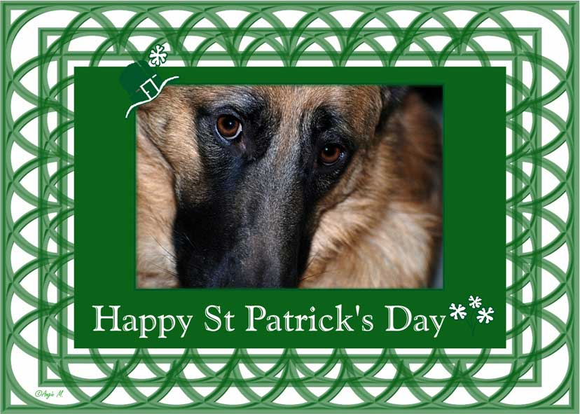 St Pattys German Shepherd Wallpaper