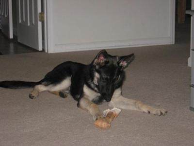 Gnawin' on the rawhide...