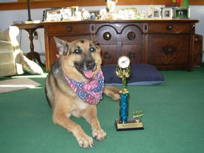 Niki after showing off old dogs can learn new tricks and be # 1 in the class