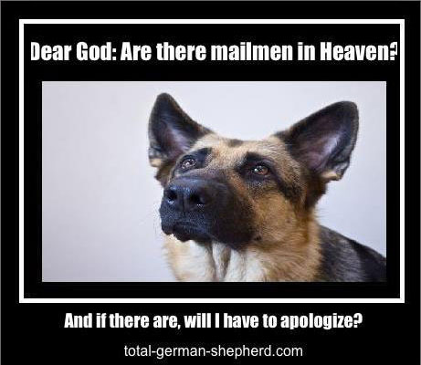 mailman German Shepherd image