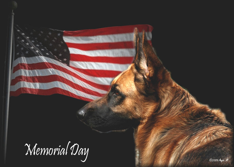 German Shepherd Memorial Day Wallpaper