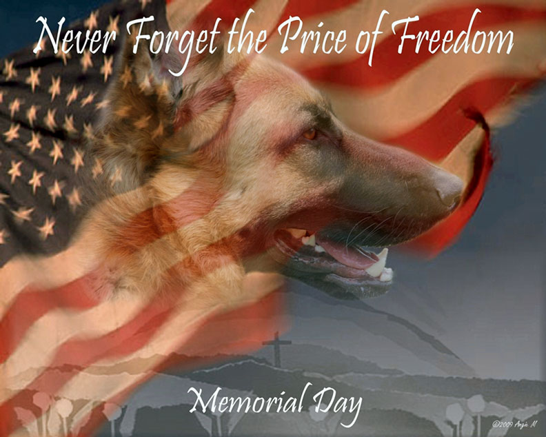 German Shepherd Memorial Day with flag Wallpaper