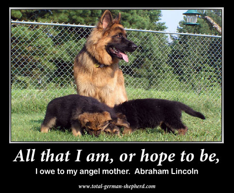 mom German Shepherd captioned image