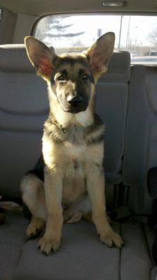 Here is Gunner at 14 weeks old! He is such a handsome man :)