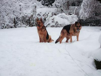 Their first snow