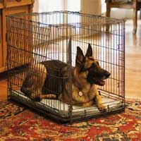 German Shepherd Dog in a Wire Crate