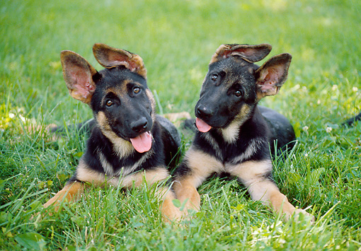 How To Get Two Males Dogs To Get Along
