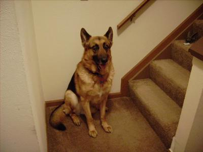 Remington had trouble getting up the stairs when he got older.