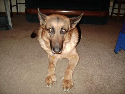 Wasn't Remington handsome?  He is about 9 years old in this photo.