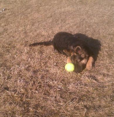 I love my ball, I love my ball!!