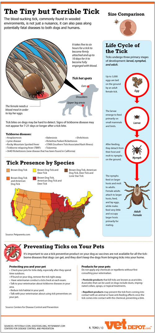 Other Tick-Borne Diseases (TBDS) - Global Lyme Alliance