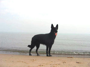 If You Are In The Market For Ideas Unisex Puppy Names Your German Shepherd Then Start By Looking At List Of Male Or Female