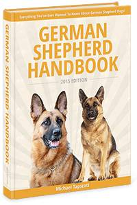 Top Female German Shepherd Names (Hundreds To Choose From)