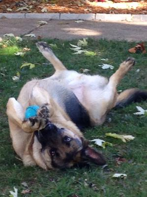 Laying in the sun while braking the squeaker in this ball