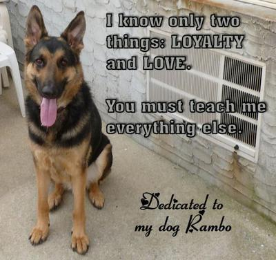 My loyal and loving Rambo