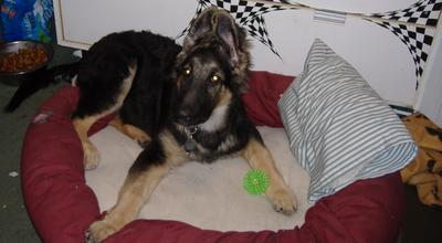 Ruger with his blinky ball